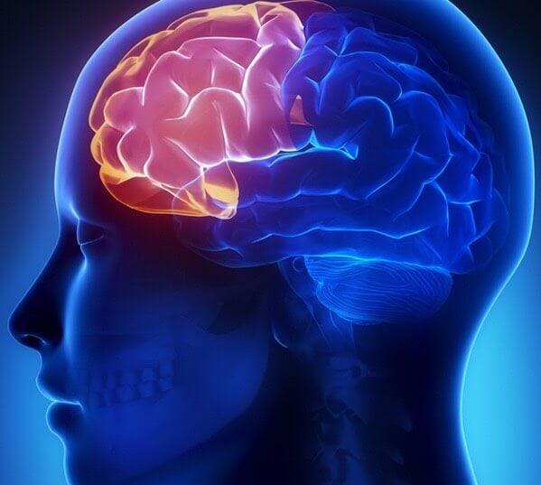 สมองส่วนหน้า(Frontal lobe)